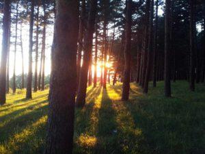 Escapadas fin de semana cerca de Madrid - La Pinilla